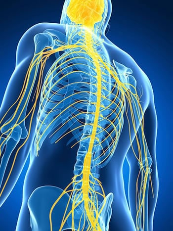 Examine This Report about Pinched Nerve Causing Arm Pain